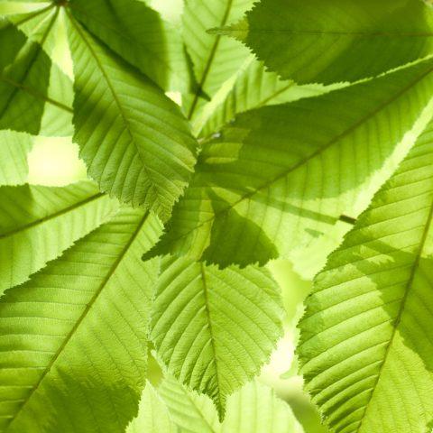 arbre_foret_bandeau_1920x1050_2